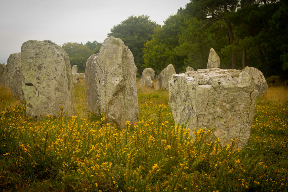 Menhirs and yellow flowers at Les Alignements de Carnac